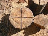 楠の年輪の中心を切る
