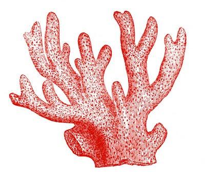 free clip art coral graphic