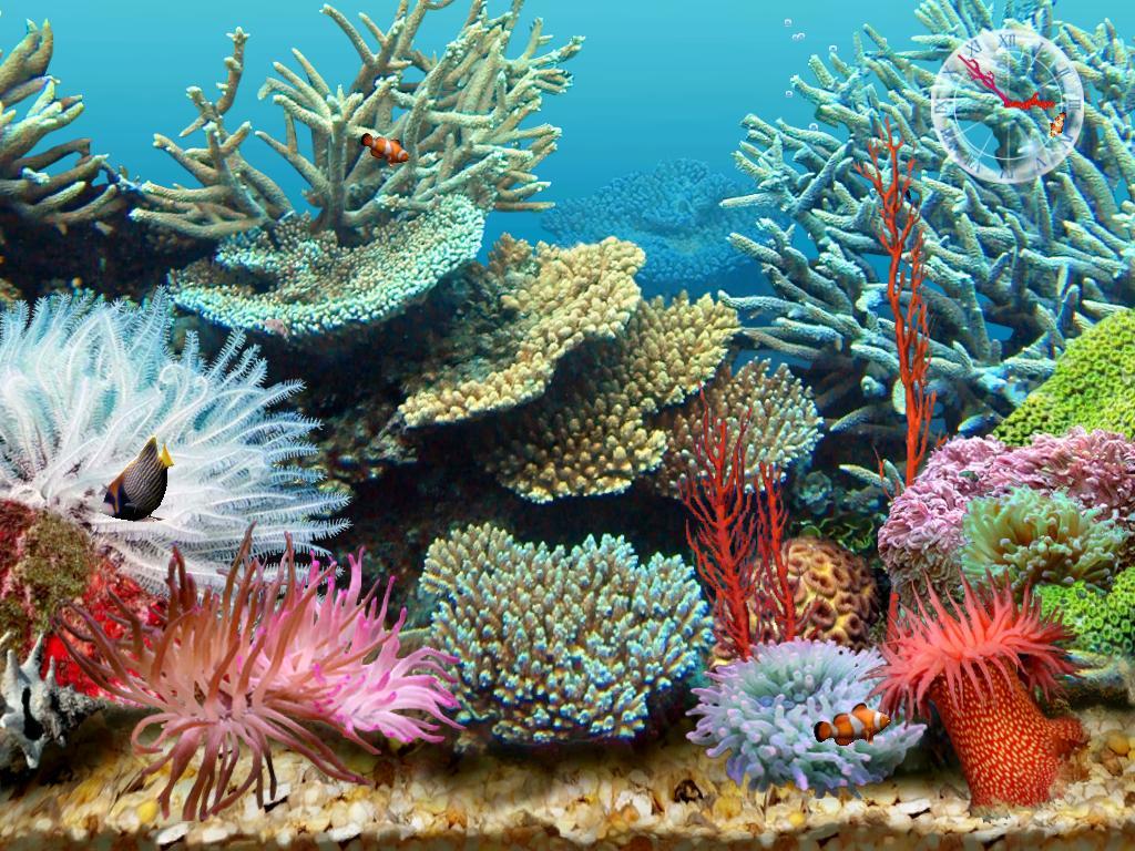 Rock World 2.0: 3D Tropical Aquarium Scene 3:Free
