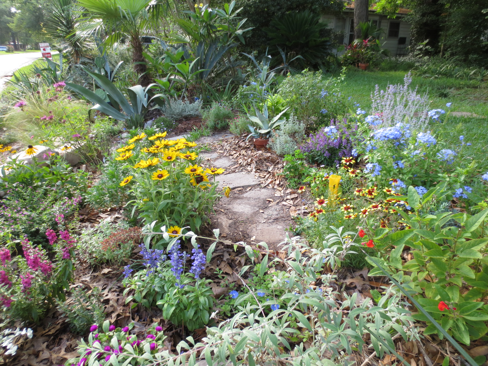 Cottage Gardens: Tropical Texana: MY TEXAS COTTAGE GARDEN For JUNE GBBD