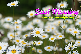 Beautiful good morning images with rose daisy flowers
