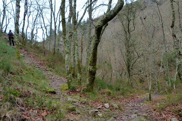 Bosque del Cioyo - Castropol