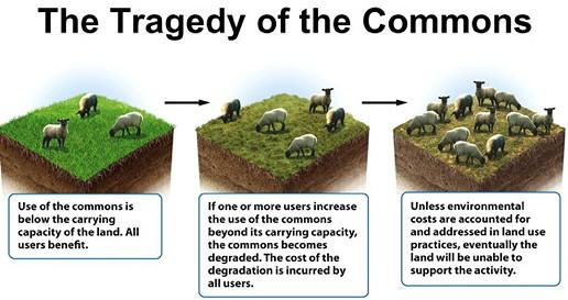 tragedy of the commons essay garrett hardin