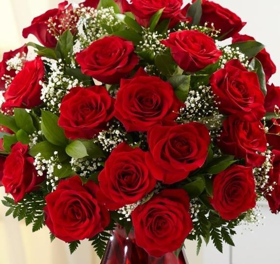 Gambar Bunga Mawar Merah Cantik Semburat Warna