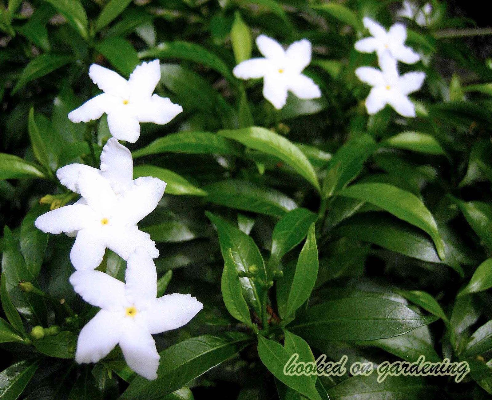Year round flowers img4123a mightylinksfo
