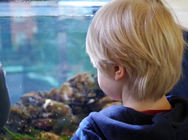 Mehr übers Meer lernen: Das Ostsee Info-Center in Eckernförde (+ Verlosung). Auf Küstenkidsunterwegs nehme ich Euch mit in die Unterwasserwelt dieses tollen Familien-Ausflugsziels, das wir mit unseren Kindern besucht und deren Aquarien wir erkundet haben. Auch toll bei Schlechtwetter und für Kindergeburtstage!