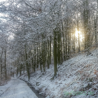 Wald Winter