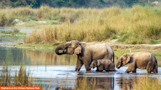 Cover Photo: Elephants at the Chitwan National Park