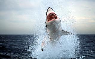 lo squalo raccontato ai bambini