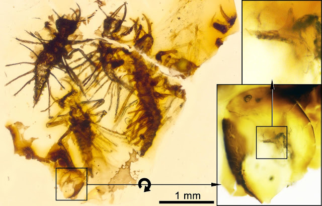 Newborn insects trapped in amber show first evidence of how to crack an egg