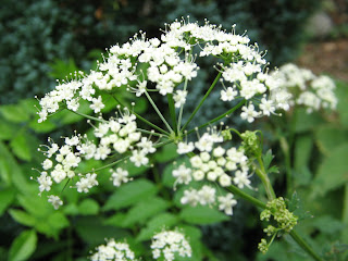 Flor en Segus (Francia)