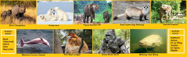 Doğada Nadir Bulunup Nesli Tükenmek Üzere Olan Hayvanlar - Kurgu Gücü