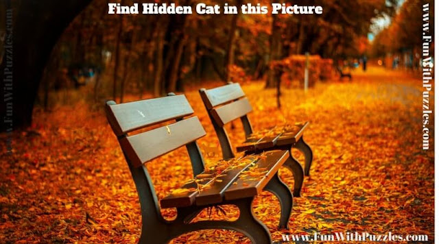 Picture puzzle image to find hidden cat