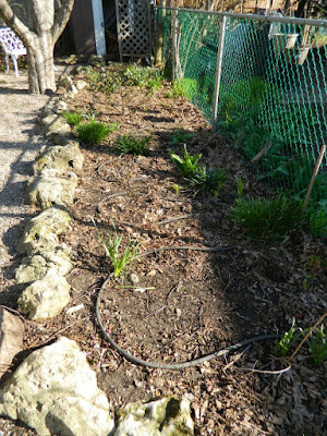 A Toronto Gardening Company Paul Jung Gardening Services Parkdale Spring Cleanup Before