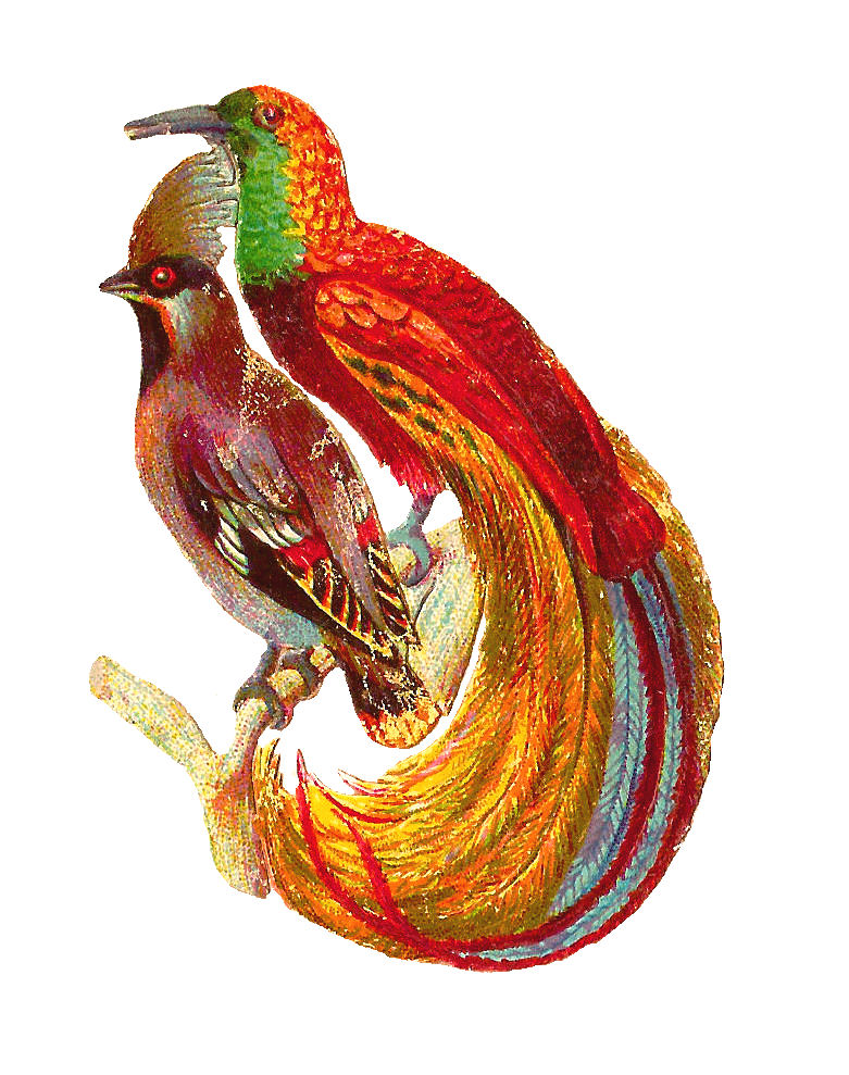 free clipart of vintage birds - photo #14