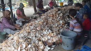 Para ibu pencungkil daging kelapa di Asahan