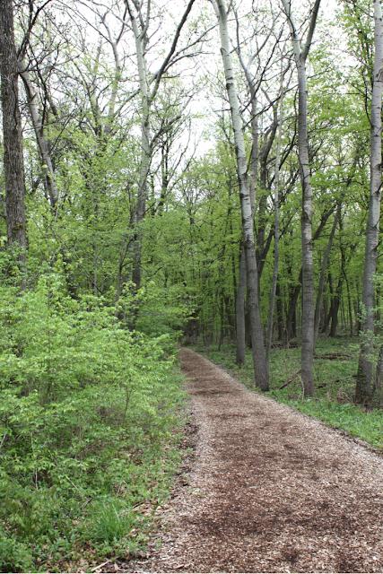 Forest path at The Morton Arboretum