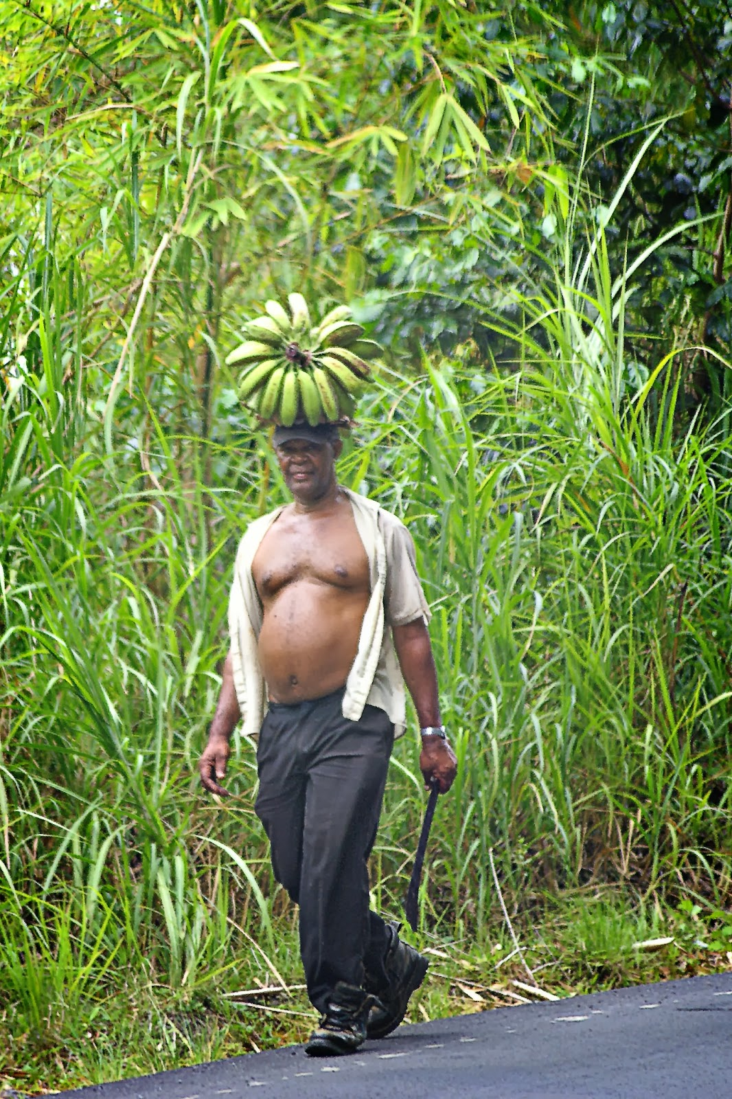 Plaintain harvester walking down the road
