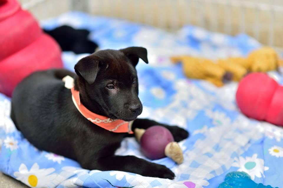 Dog Adoption Day Hong Kong