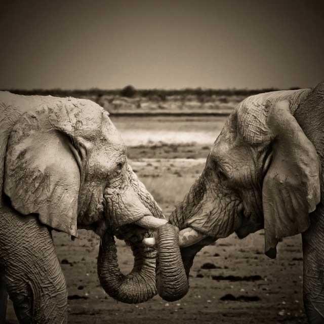 amor-entre-elefantes