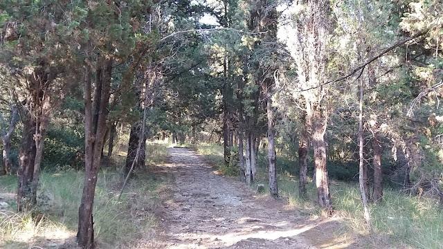 Π.Δ.Ε:Προληπτική απαγόρευση κυκλοφορίας σε εθνικούς δρυμούς, δάση ...