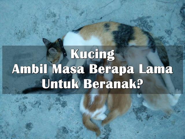 Kucing Ambil Masa Berapa Lama Untuk Beranak?