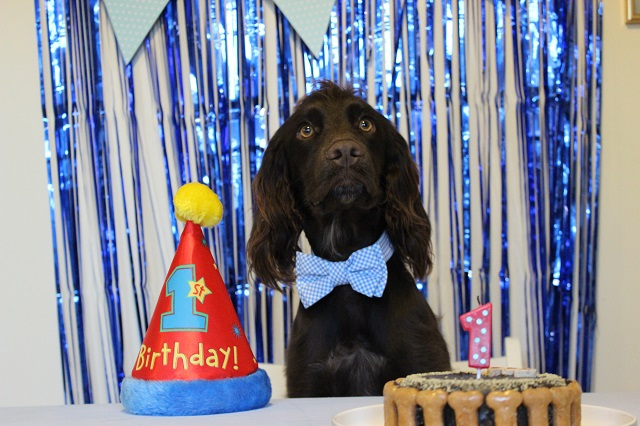 How to throw a doggy Birthday Party