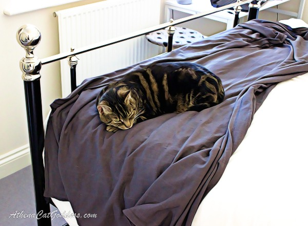 cat art of cat sleeping on bed