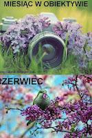 http://misiowyzakatek.blogspot.com/2016/06/miesiac-w-obiektywie-czerwiec.html