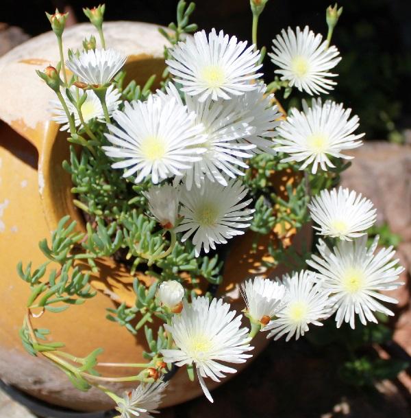 Reproducir plantas suculentas guia de jardin for Que es exterior y interior