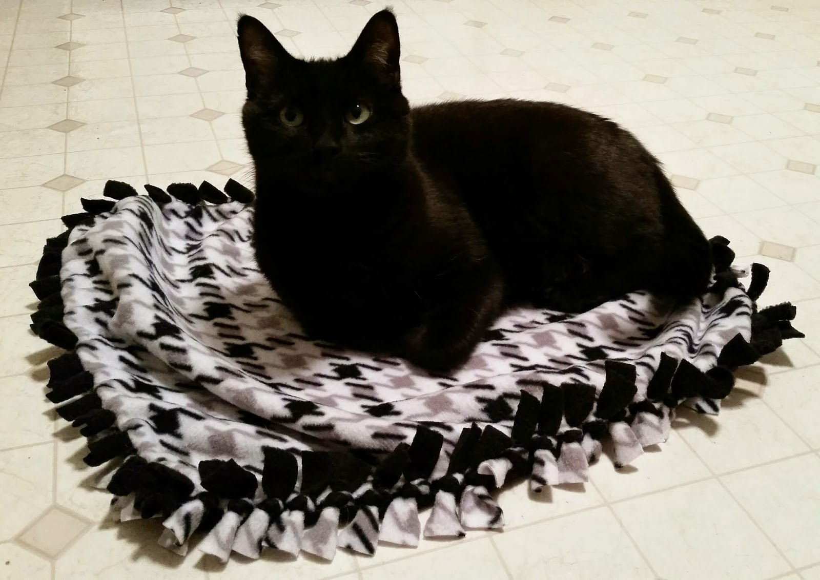 Cat on pet fleece blanket