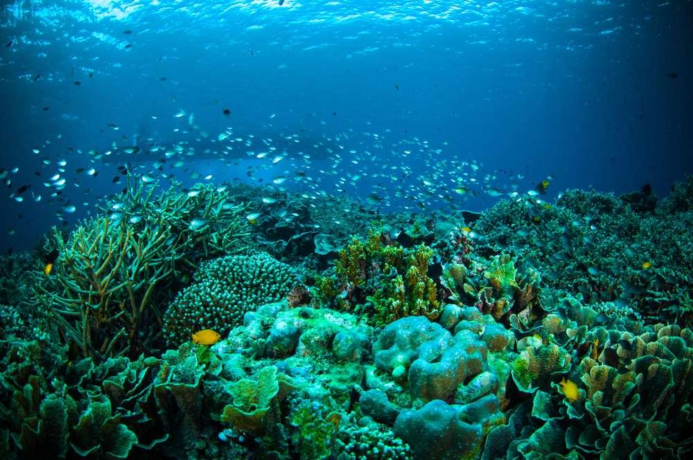 Thousand fish below boat bunaken sulawesi indonesia underwater photo (c) Shutterstock