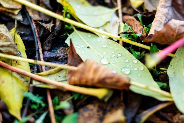 Herbstlaub Fotografie
