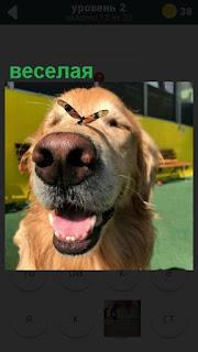 веселая собака у которой на носу сидит бабочка