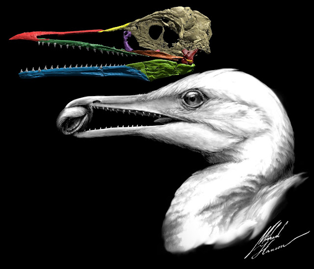 Scientists find the first bird beak, right under their noses