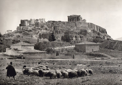 Πρόβατα κάτω από την Ακρόπολη 1903 Fred-Boissonnas