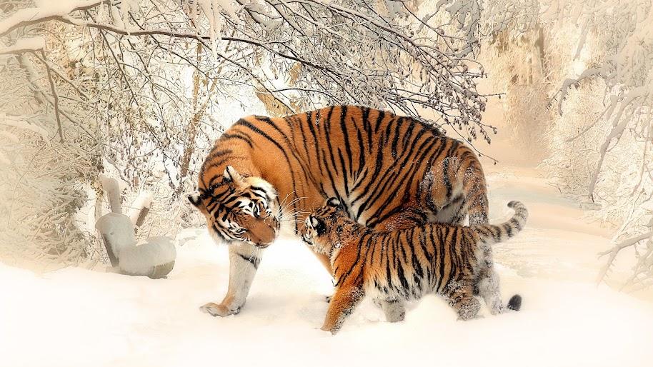 Tiger, Cub, 4K, 3840x2160, #44