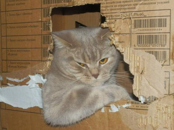 смешной кот водитель в коробке
