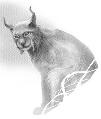 нарисовать рысь