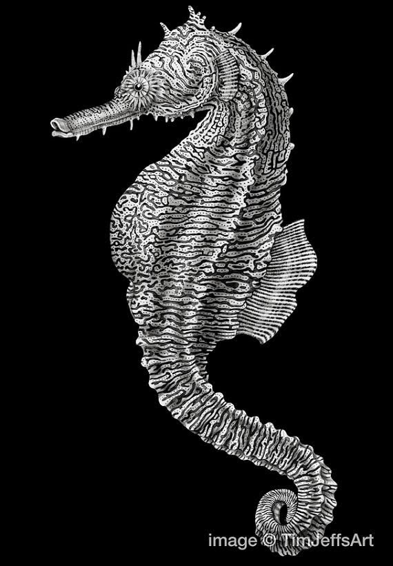 10-Seahorse-Tim-Jeffs-All-Creatures-Great-and-Small-Ink-Drawings-www-designstack-co