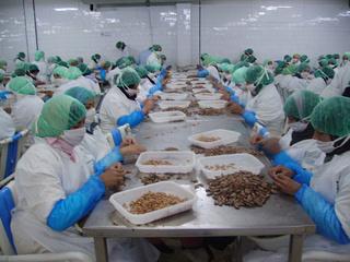 Ouvrières De Décorticage Des Crevettes sur OUJDA ANGAD