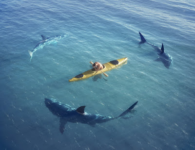 a man in a kayak is circled by sharks
