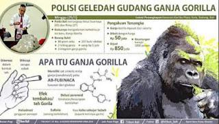 tembakau gorilla