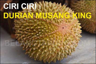Ciri Fizikal Durian Musang King