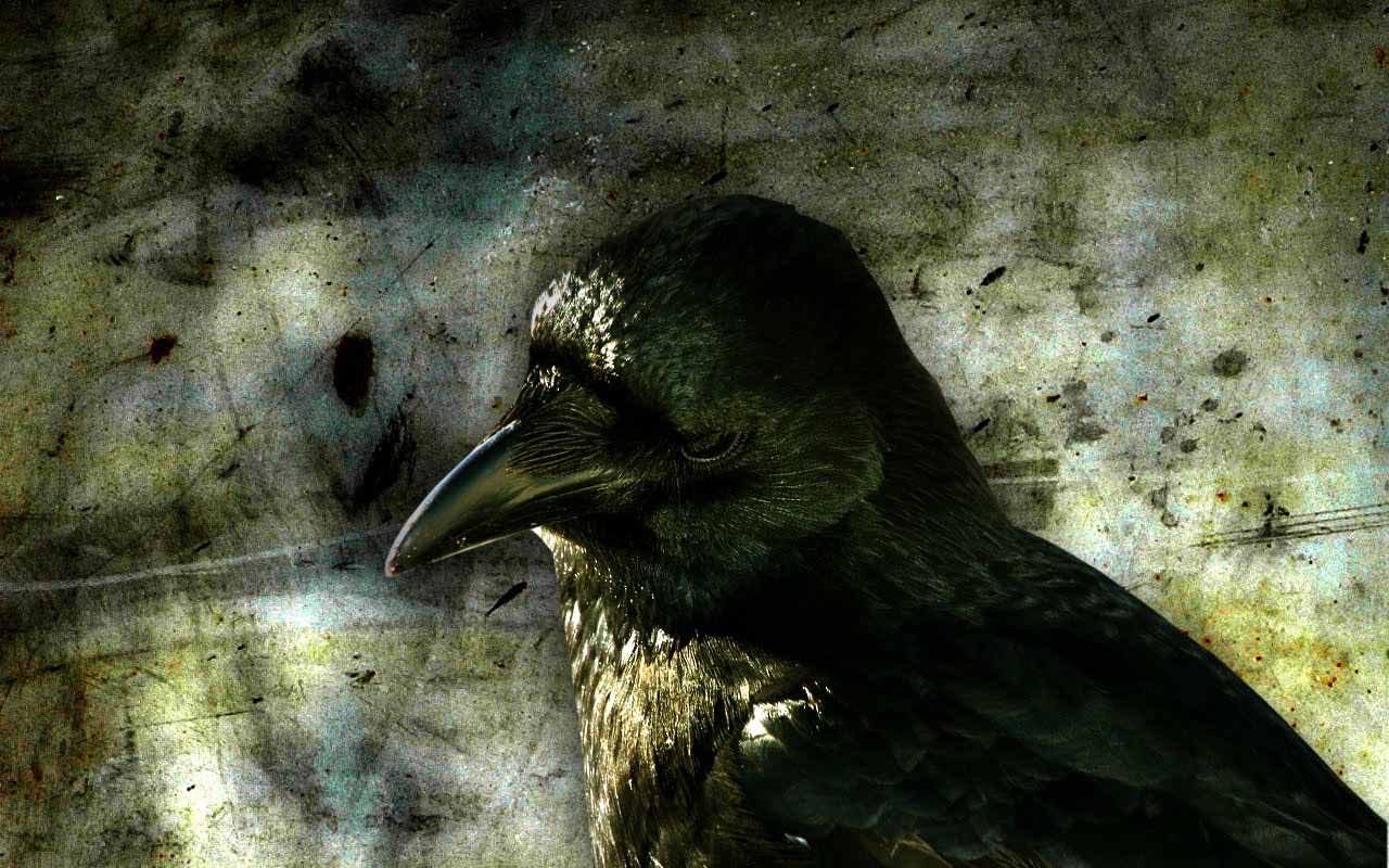 Crow hd wallpapers dwito wallpaper - The crow wallpaper ...