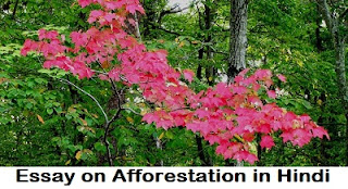 Essay on Afforestation in Hindi