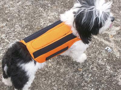 colete de imobilização para cães