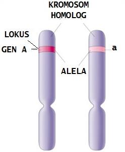 materi genetika biologi kelas 12