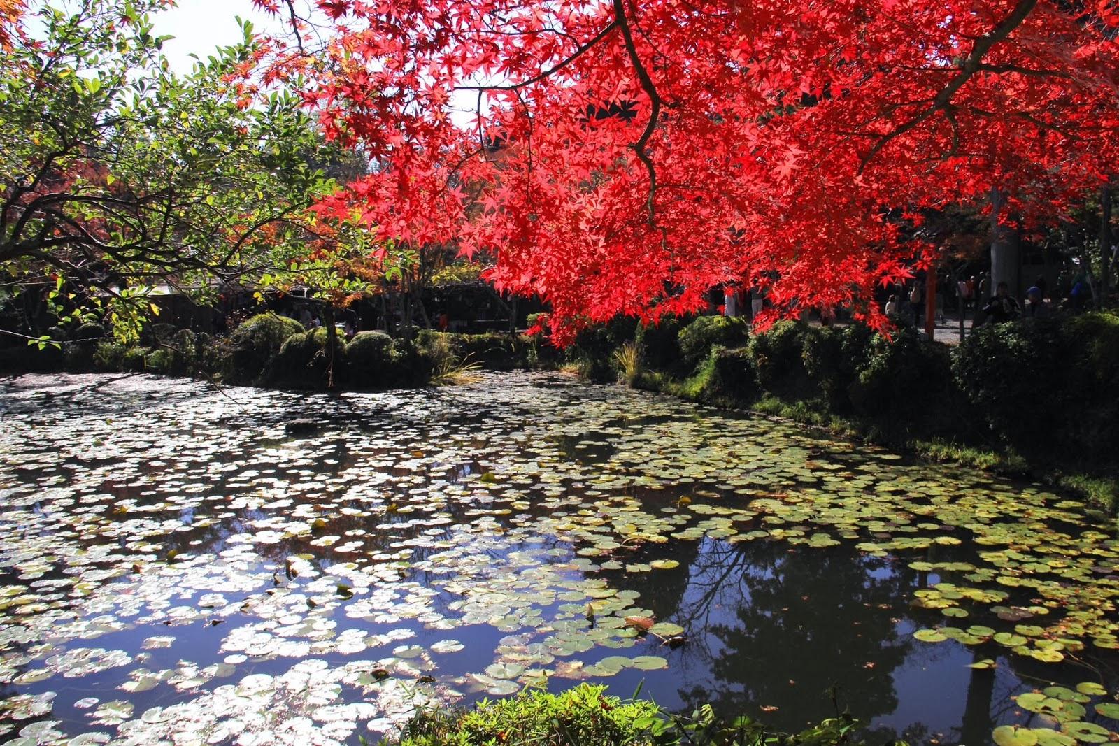Paisajes Impresionantes De La Naturaleza: Farandula Digital ├: Imagenes Impresionantes De La