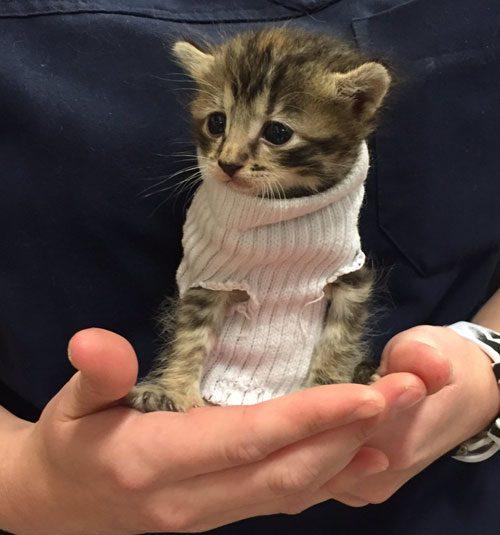 Gato em uma camisola!